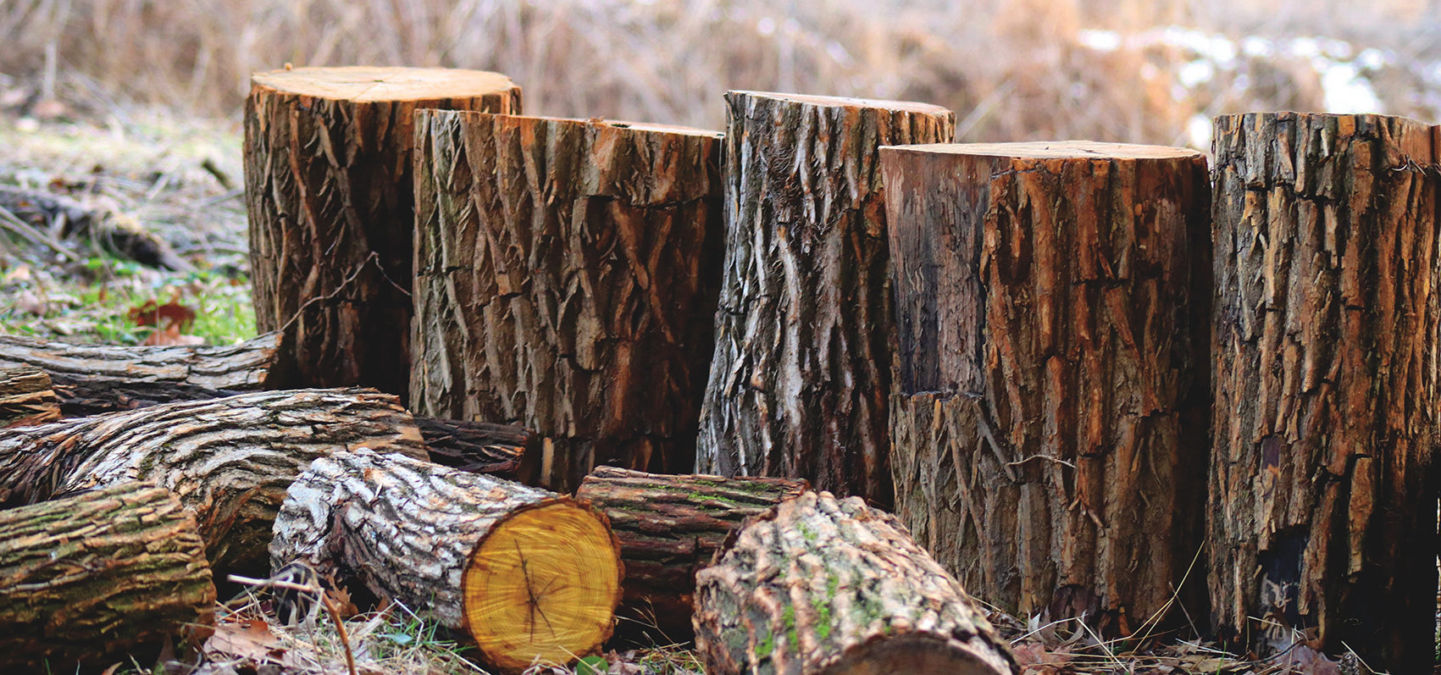 Bosbouw depth of field photography of brown tree logs 923167
