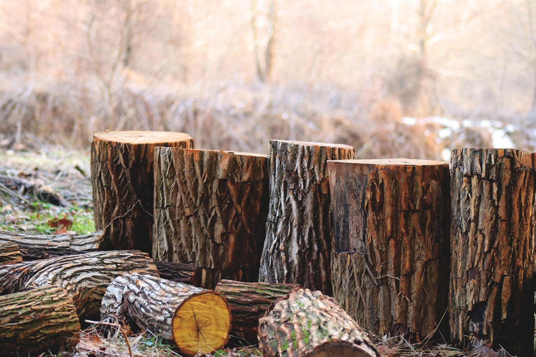 Bosbouw depth of field photography of brown tree logs 923167